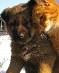 Друзья. Тяпа и Кисенок