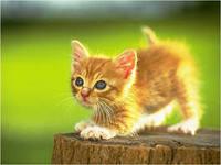 Котенок Кисенок готов идти в поход.