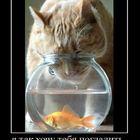 Ой, Рыбка!