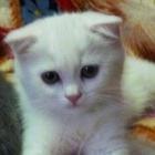 Котенок Кисуля